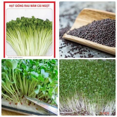 Nên mua hạt giống rau mầm tại các địa chỉ cung cấp có uy tín