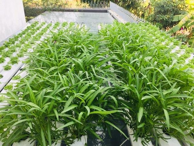 Đất trồng rau muống phải là đất đã qua xử lý sâu bệnh và có sẵn nguồn dinh dưỡng từ phân bón lót