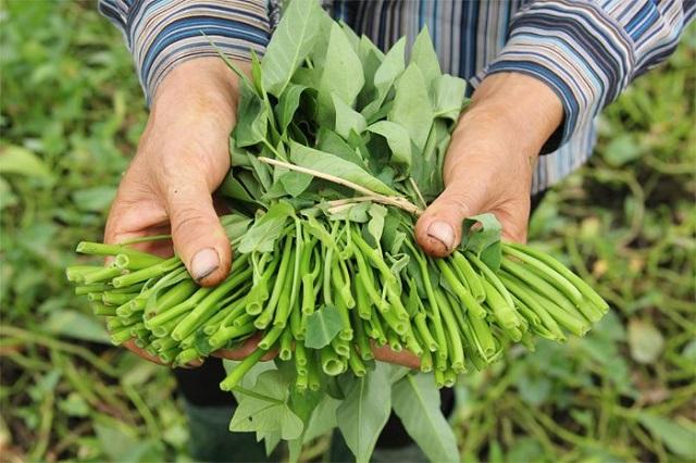 Bà con nông dân có thể sử dụng một số loại thuốc đặc trị riêng để khống chế tình trạng lây lan sâu bệnh