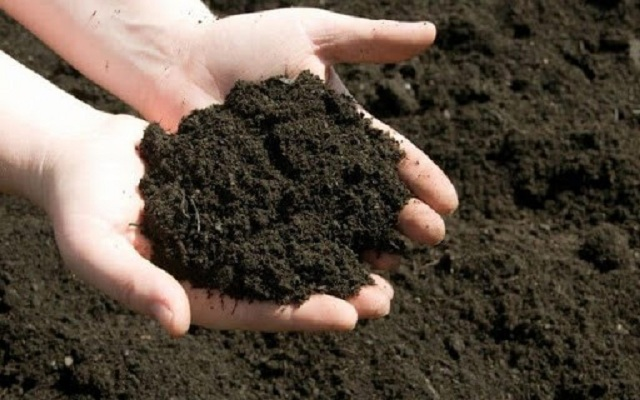 Có thể trộn phân bò ủ hoai vào đất để tăng độ tơi xốp