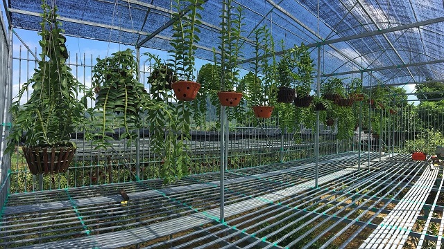 Hoa lan trong từng thời kỳ phát triển sẽ có nhu cầu dinh dưỡng khác nhau