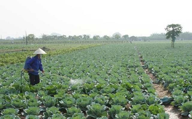 Phân bón lá giúp cung cấp dưỡng chất cho cây trồng ở hiệu suất cao