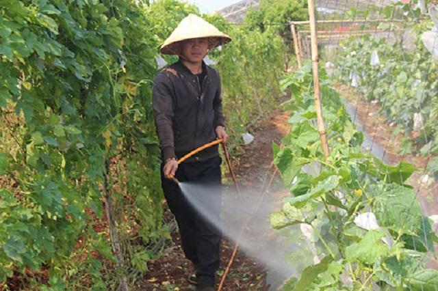 Phân bón lá là phương pháp bổ trợ, không phải là hình thức cung cấp dưỡng chất chính cho cây trồng
