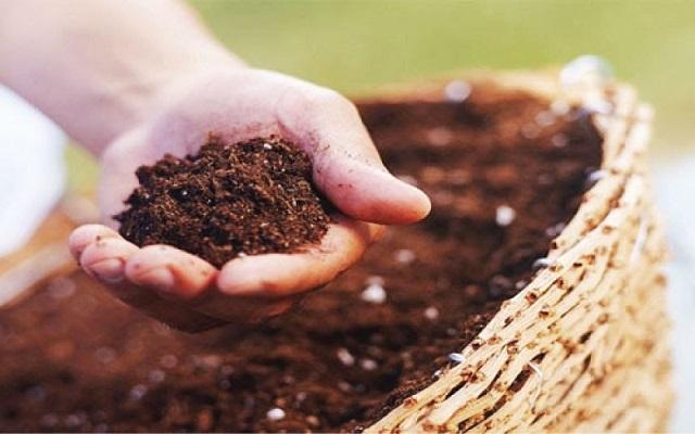 Phân bón còn cung cấp nguồn dinh dưỡng thiếu hụt cho đất trồng