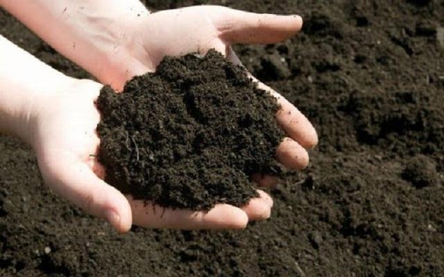 Phân bò cần được ủ trước khi sử dụng để tiêu diệt mầm bệnh