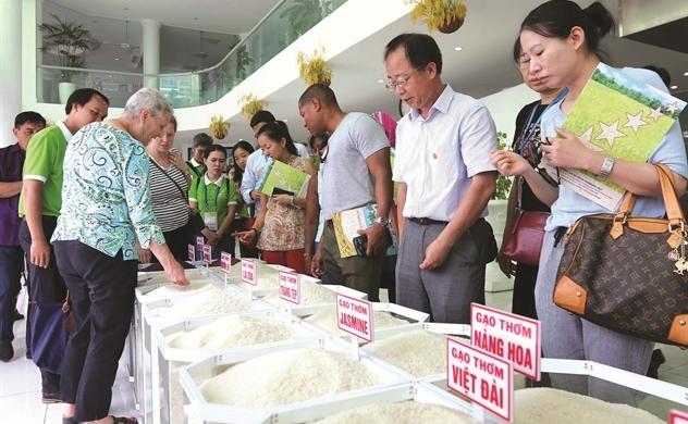 Giới thiệu các giống gạo ngon của Việt Nam vào EU