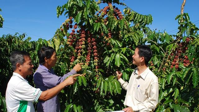 Việt Nam chủ yếu xuất khẩu cà phê hạt chưa rang Robusta sang Nhật Bản