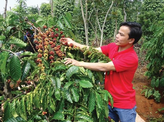 Trong năm 2020 Việt Nam đã trở thành nhà cung cấp cà phê lớn nhất Nhật Bản