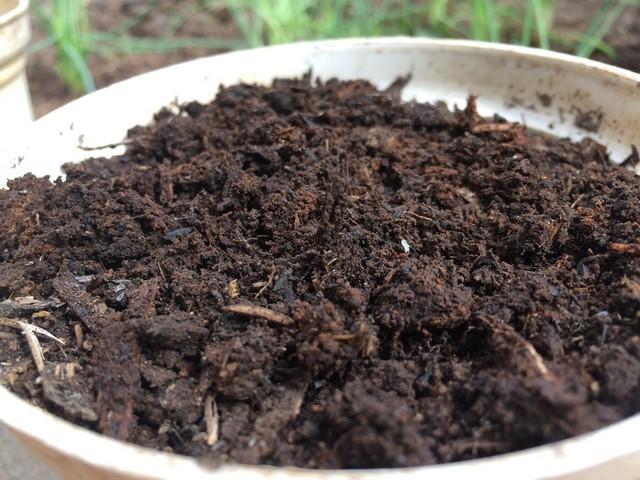 Hướng dẫn chi tiết cách ủ phân hữu cơ đơn giản và hiệu quả tại nhà