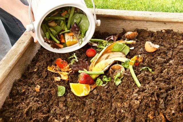 Hướng dẫn cách ủ phân xanh từ rác thải nhà bếp hiệu quả nhất