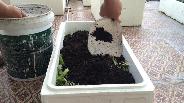 Có thể tận dụng các thùng xốp có nắp đậy để ủ phân xanh