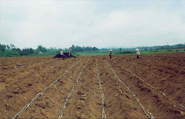 Canh tác đất trồng mía cần cày bừa đất sâu từ 25 – 30cm