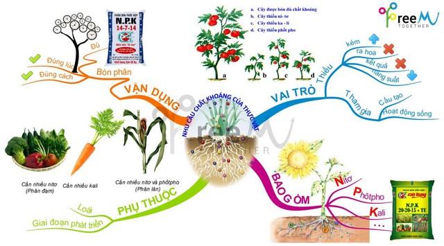 Mỗi loại phân đạm Nitrat mang đến những tác dụng khác nhau