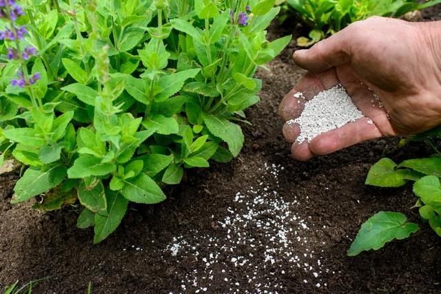 Phân đạm Nitrat thúc đẩy quá trình sinh trưởng và phát triển của cây, nâng cao năng suất
