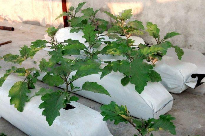 Grow bag, túi giá thể trộn sẵn trồng cây từ xơ dừa Go Green Sri