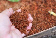 Tìm hiểu về các loại giá thể trồng cây phần 1