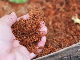 Thị trường xơ dừa được dự báo sẽ đạt gần 735 triệu đô la Mỹ vào cuối năm 2029