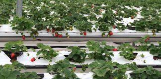 Tìm hiểu về túi trồng cây làm từ xơ dừa grow bag
