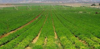Nông nghiệp công nghệ cao là gì?