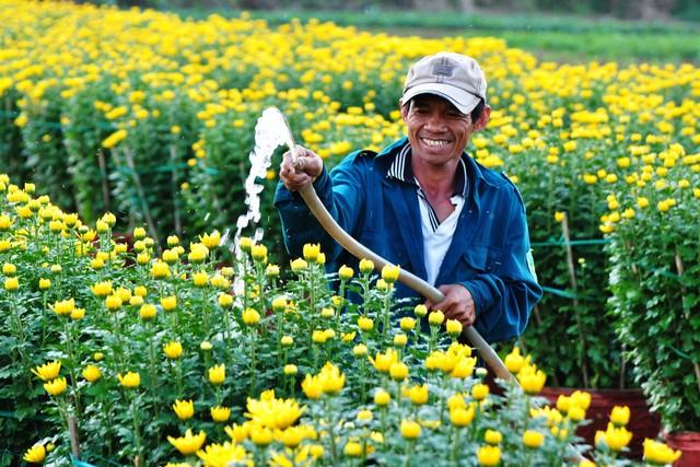 Cần chú ý lượng nước tưới cho hoa cúc để cây ra hoa đúng dịp Tết