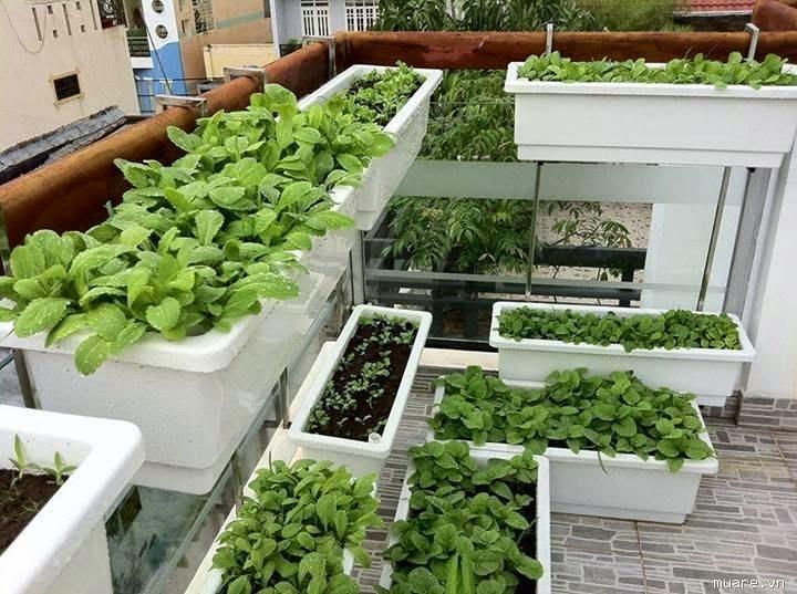Các phương pháp trồng rau sạch tại nhà