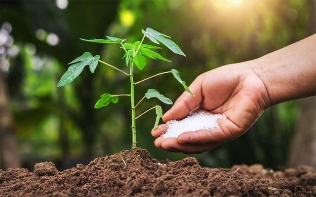 Tác dụng của phân bón ảnh hưởng rất lớn đến cây trồng