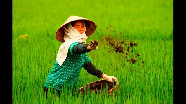 Phân bón đóng một vai trò cực kỳ quan trọng, không thể thiếu trong trồng trọt
