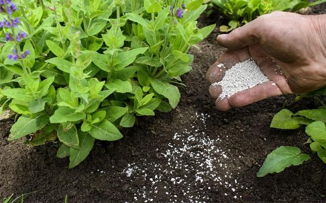 Phân bón là gì? Vai trò của phân bón đối với cây trồng