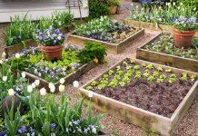 Mô hình trồng rau sạch