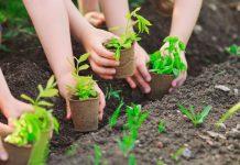Áp dụng cách trộn đất trồng rau trong trồng trọt