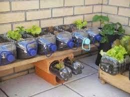 Chai nhựa lớn trồng rau mầm