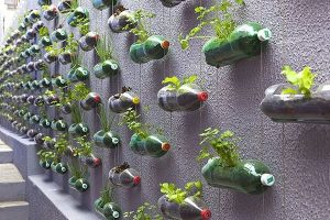 Giàn treo trồng rau mầm