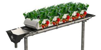 Hệ thống thủy canh tốt nhất cho dâu tây