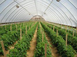 Tiến bộ khoa học và kĩ thuật trong nông nghiệp