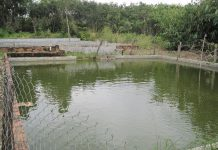 Mô hình vườn ao chuồng