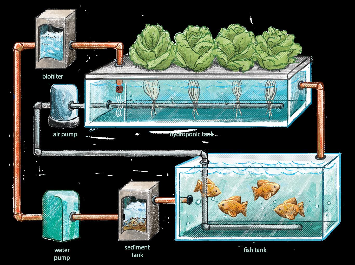 Mô hình Aquaponic