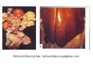 bệnh thường gặp gây nguy hiểm đến tính mạng của vịt