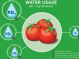 Tiết kiệm nước bằng canh tác thủy canh