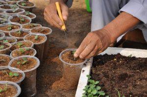 Trộn giá thể trồng rau thủy canh vào đất