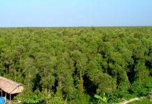 Mô hình vườn rừng ở khu du lịch sinh thái vườn quốc gia U Minh Thượng