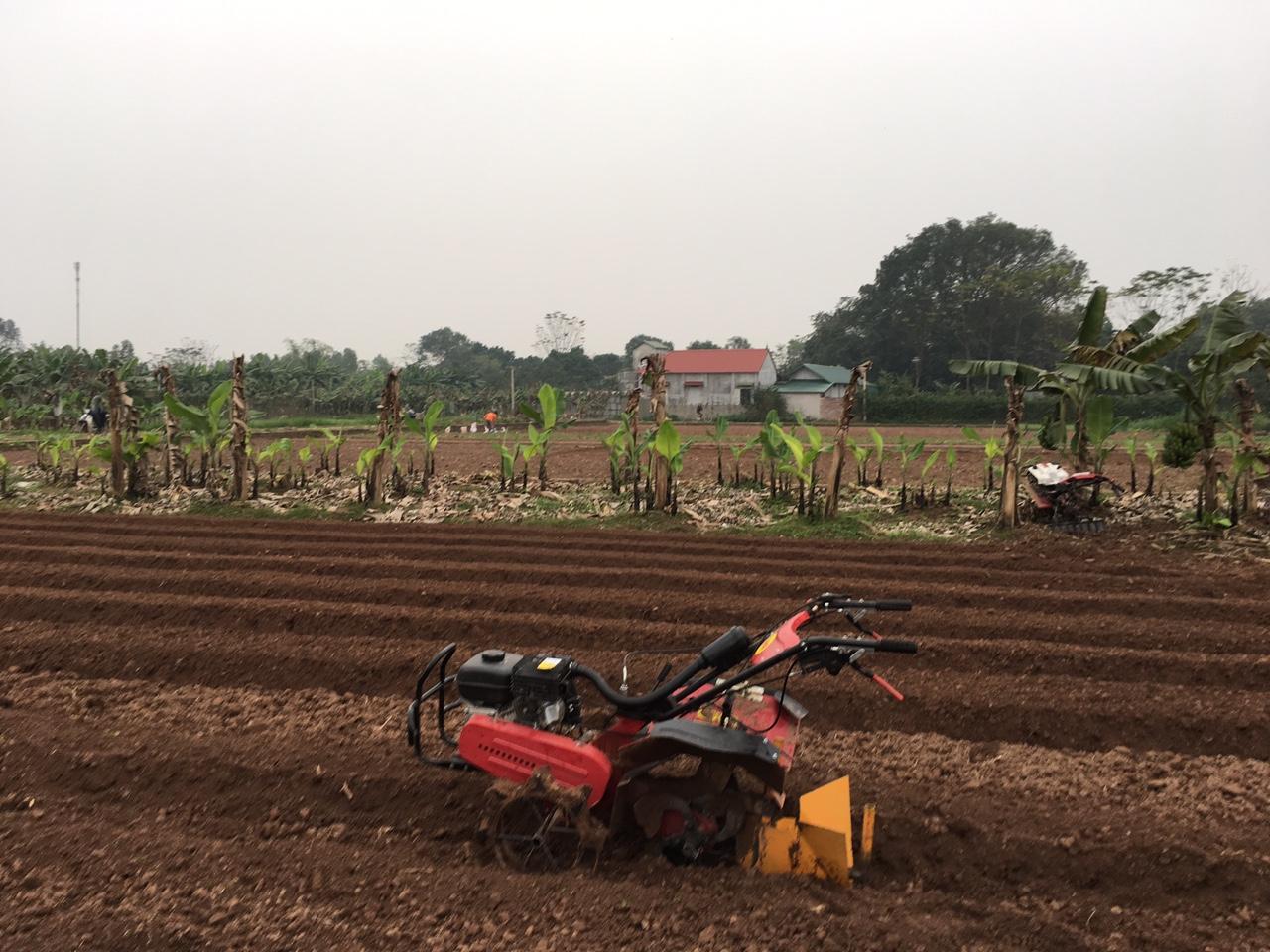 máy cày xới đất