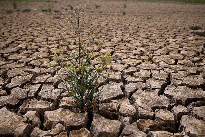 đất khô cằn khó sản xuất cần cải tạo