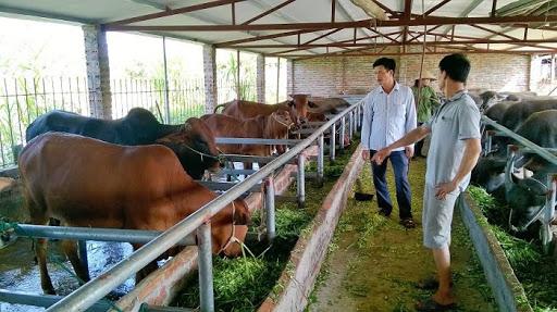 2 người nông dân đang đi kiểm tra đàn bò