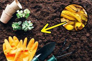 Phân hữu cơ làm từ vỏ chuối