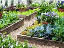 Các loại rau trồng mùa hè là gì