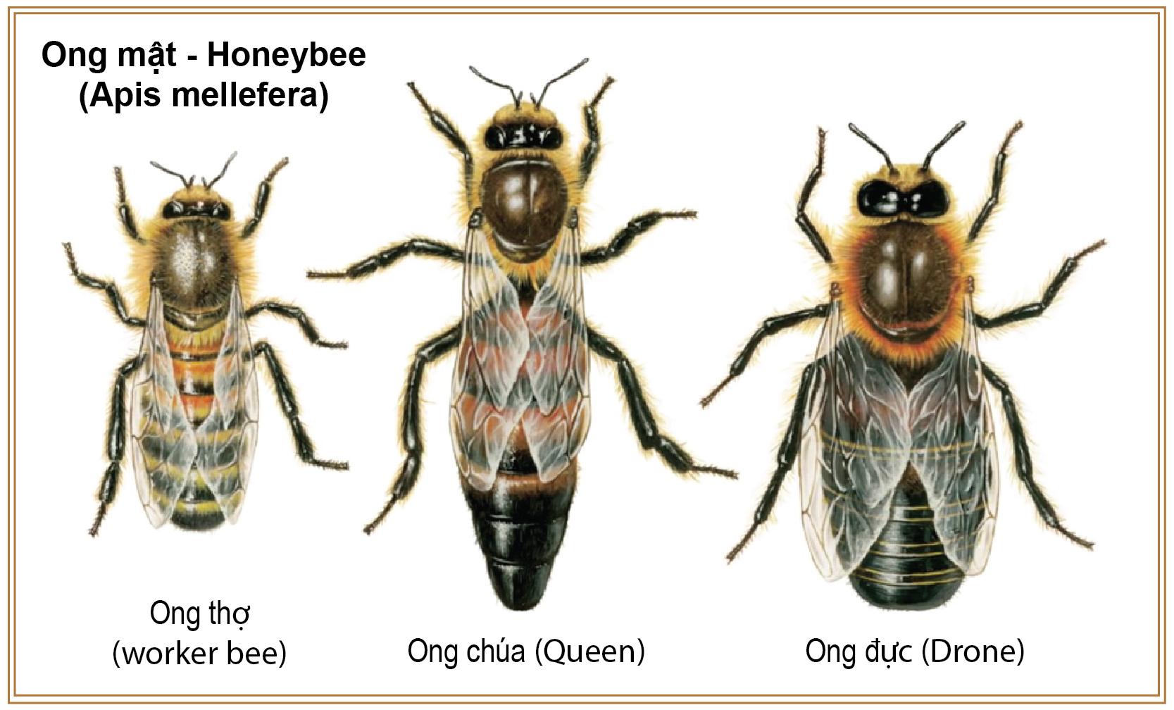 một đàn ong