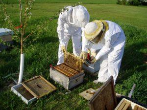 Cơ hội đến từ nuôi ong