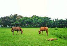 nghề nuôi ngựa