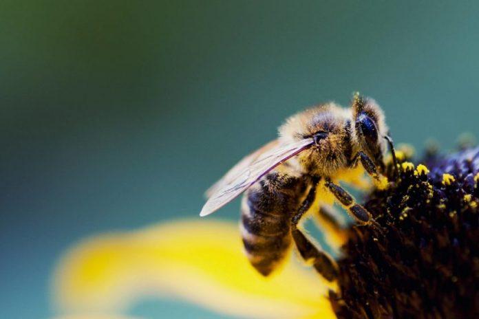 Kỹ thuật nuôi ong