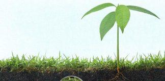 phân hữu cơ vi sinh tốt cho cây